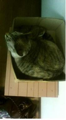 箱入り娘( 猫)?