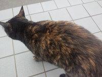 一ノ関「山桜 桃の湯」で見かけた猫達