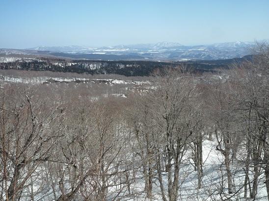 雪解けの樹海ラインを行く
