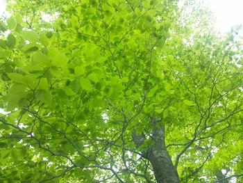 芽鱗降る森へ