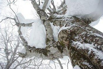 巨木に登ろう!ツリークライミング