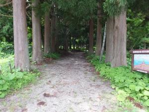 十和田湖西湖畔歩き~その3~