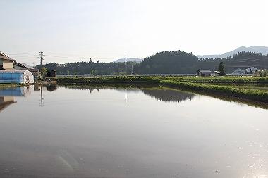 鹿角の田んぼ