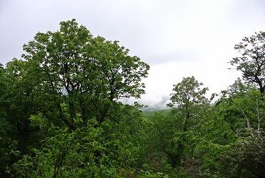 ミソナゲ峠とトチ