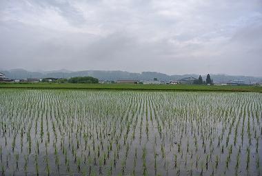 6月9日の田んぼ