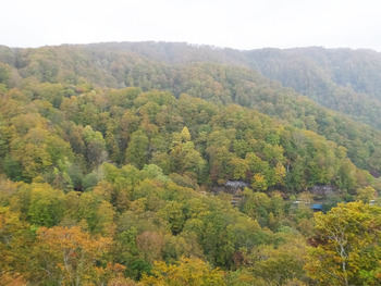 十和田湖の紅葉状況