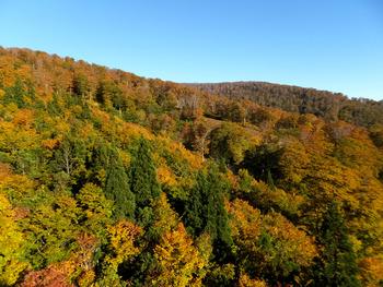 森吉山の紅葉
