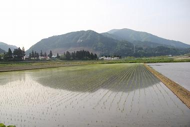 八幡平の田んぼ