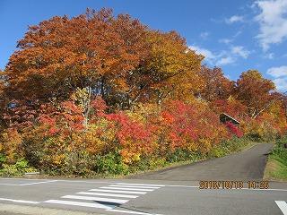 八幡平の紅葉は、今が最盛期!