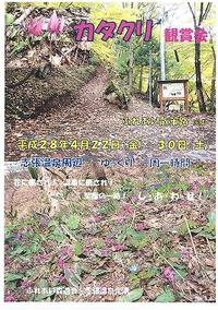 志張温泉でカタクリ鑑賞会