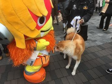 ゆるキャラ、秋田犬