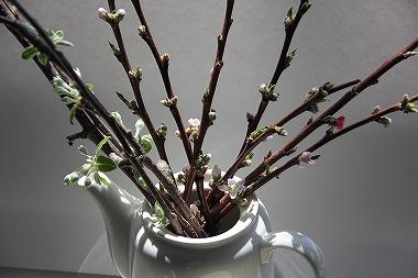 北限の桃の枝