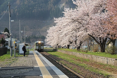 八幡平駅の桜