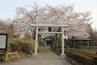 4月27日 鹿角の春 桜山公園・大湯環状列石・ホテル鹿角