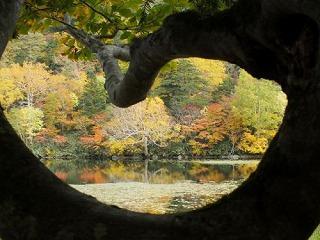 秋のでんぱく もうすぐ紅葉が見頃です!