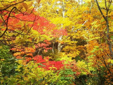 10月10日 八幡平大沼の紅葉