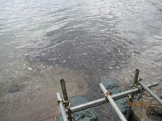 十和田湖ヒメマス遡上開始!