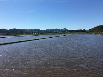 田んぼの水張り