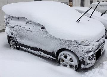 先日の暴風雪で・・・
