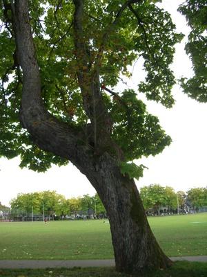 木が生えてる!