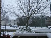 またまた雪です