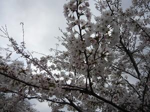 花の季節が始まりました