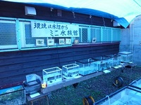ミニ水族館in中滝ふるさと学舎