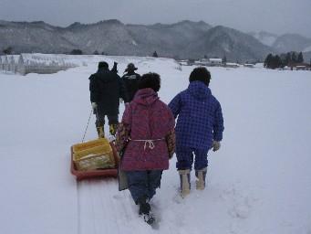 冬のネギ掘り