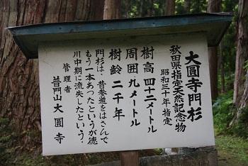 秋田県指定天然記念物 大圓寺門杉