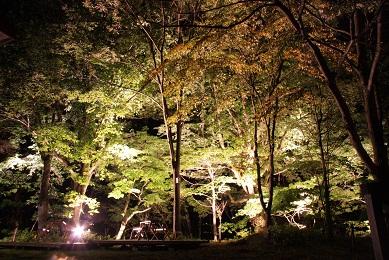 中滝ライトアップ