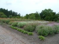 大湯の花畑