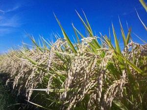 収穫の秋☆☆☆