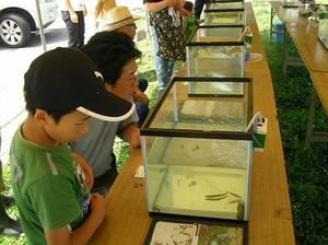 米代川 ミニ水族館