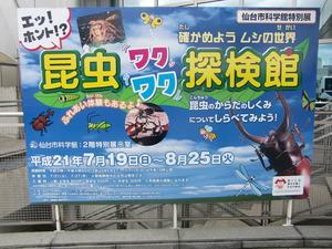 仙台市科学館(夏休み昆虫探検館)