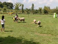 羊、馬、ウサギとふれあえます