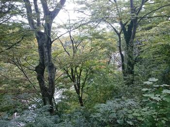 秋保温泉の木々