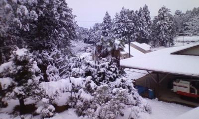 雪がもっさり