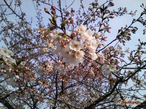 春は・・・一歩一歩ずつしか進まない・・・