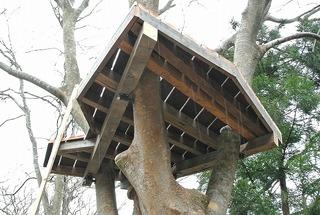 石巻・蛤浜に建設中のツリーハウス