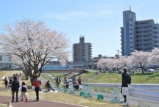 笊川でお花見ランチ!