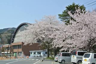 週末は宮城・三陸沿岸の桜が見ごろ!