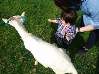 蔵王ハートランドで動物と触れ合い