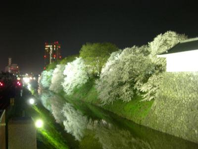 山形桜情報 霞城公園の夜桜
