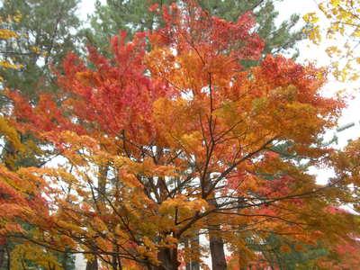 山形の紅葉