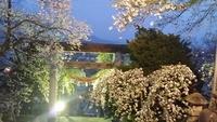 烏帽子山の桜