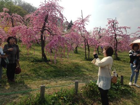 花もも満開、春爛漫♪