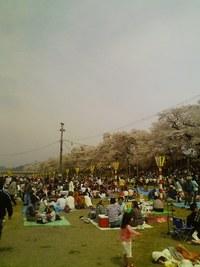 大河原・柴田の一目千本桜
