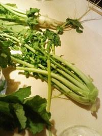 小瀬菜大根を食す会