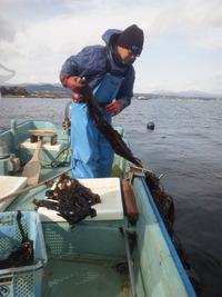 気仙沼・旬のワカメの現場を視察