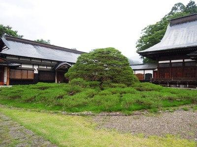 本覚寺の左右の松